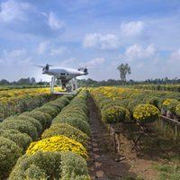 Gestionali ERP per aziende agricole